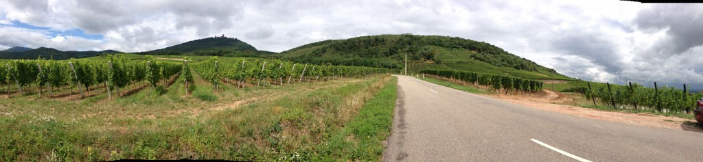 Route de vin in Alsace