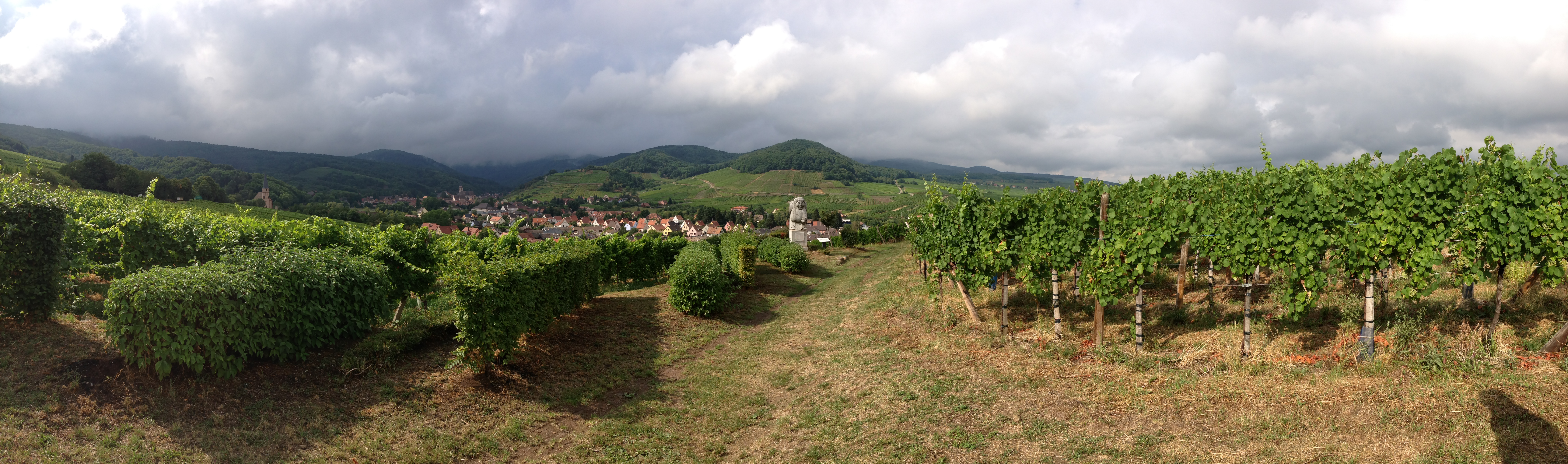Route de vin in Alsace