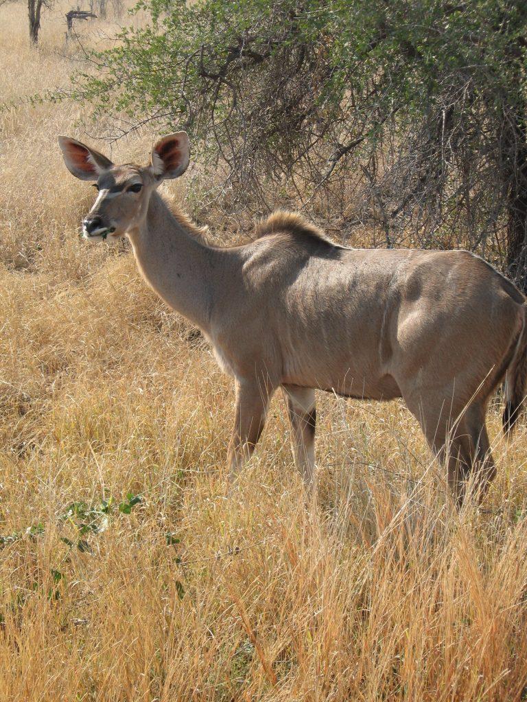 Afrika 2007 303